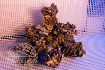 SUPRA ROCKS Lebendgestein (Sulawesi) - handpicked (per kg)
