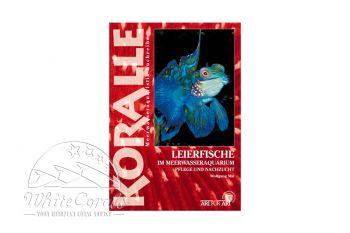 KORALLE - Leierfische im Meerwasseraquarium (Wolfgang Mai)