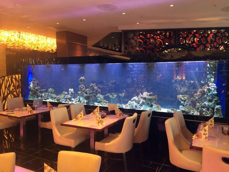 Das 5m lange Aquarium