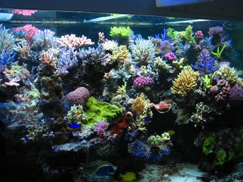 2.000 L SPS Aquarium