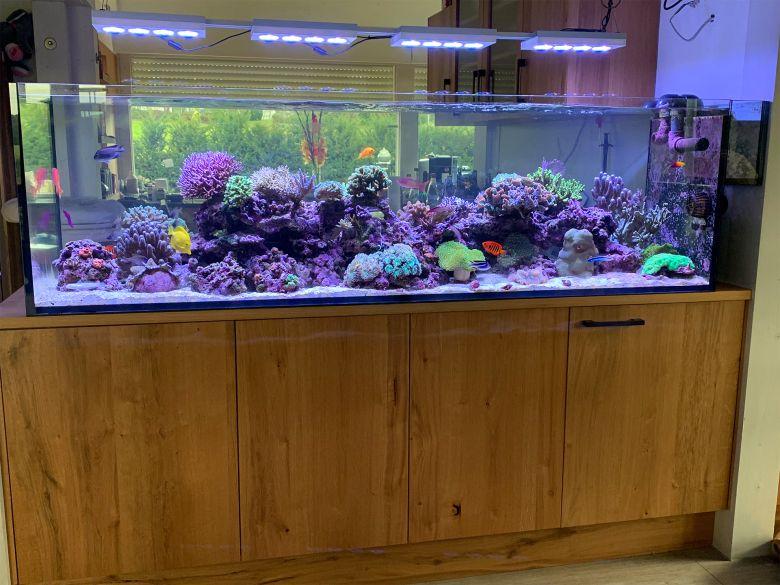 Raumteiler-Aquarium Küche