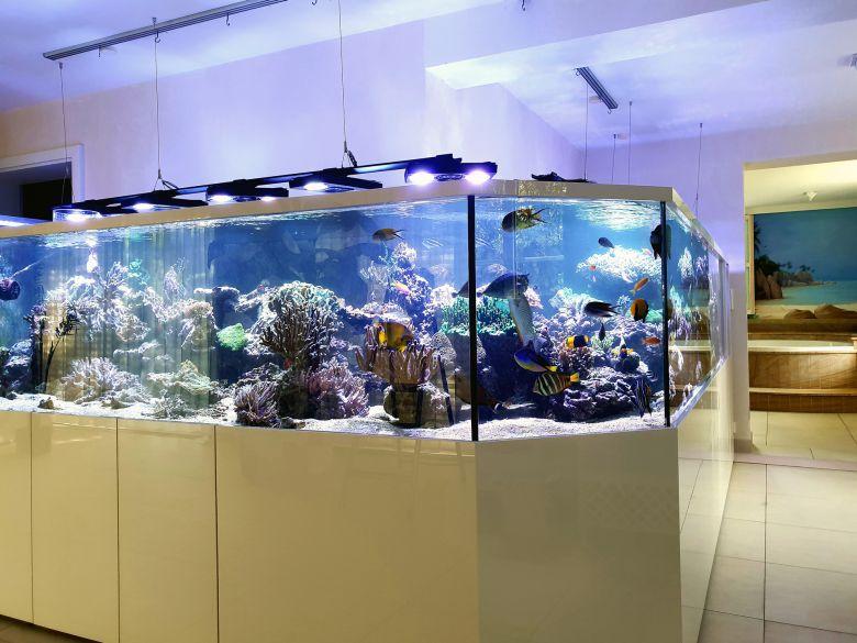 Das große L-Aquarium