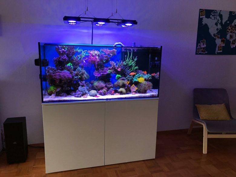 Meerwasseraquarium mit 3 Riffsäulen