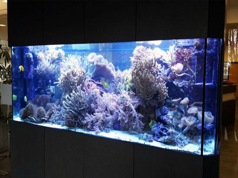 Meerwasseraquarium im Foyer