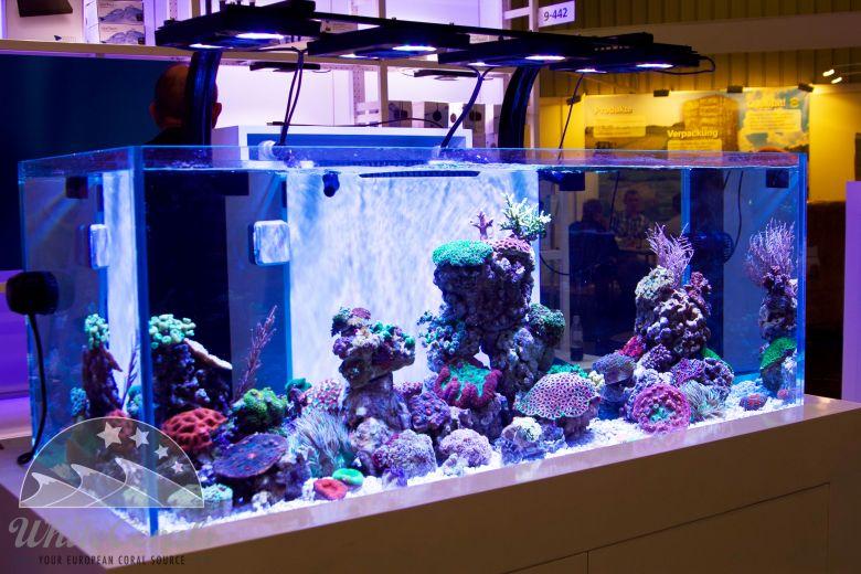 Messeaquarium für Ecotech Marine