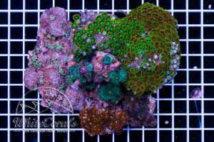 Multicolor Mixrock L