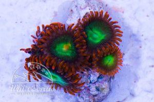 Prodibio Biokit Reef Nano 30 Amp.
