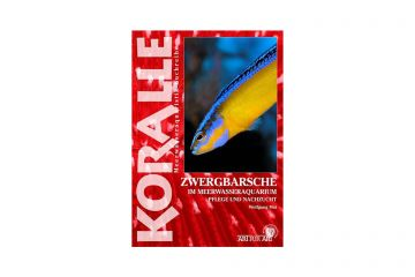 KORALLE - Zwergbarsche im Meerwasseraquarium - Wolfgang Mai