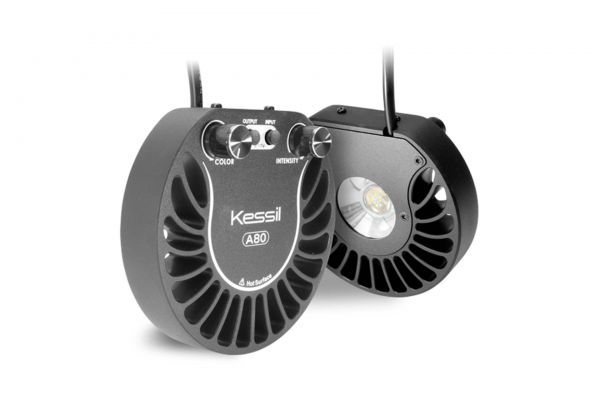 Kessil A80 Tuna Blue LED