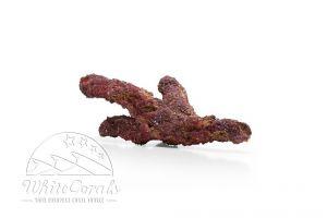 CaribSea Life Rock Belize Branch 9,07 kg Lebendgestein