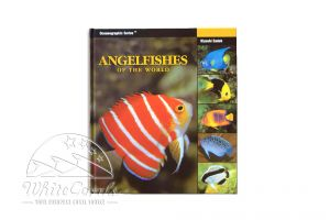 Two Little Fishies Angel Fishes of the World (Englisch)
