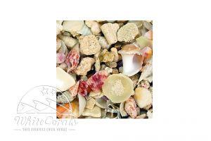 CaribSea Seaflor Aruba Puka Shell
