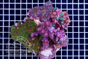 Multicolor Mixrock XL