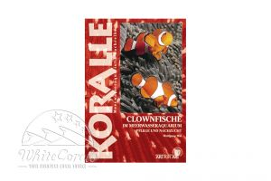 KORALLE - Clownfische im Meerwasseraquarium (Wolfgang Mai)