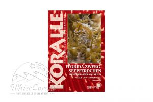 KORALLE - Florida Zwerg Seepferdchen im Meerwasseraquarium (Daniel Knop)