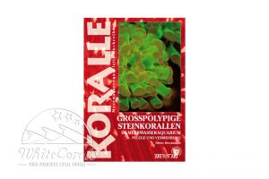 KORALLE - Großpolypige Steinkorallen im Meerwasseraquarium (Dieter Brockmann)