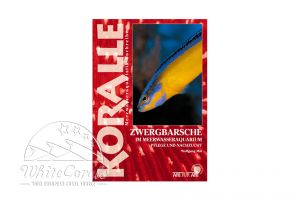 KORALLE - Zwergbarsche im Meerwasseraquarium (Wolfgang Mai)