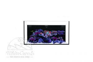 Waterbox Aquariums All in One 28.2, 30.2, 40.2 oder 50.3 ohne oder schwarz bzw. weißem Unterbauschrank