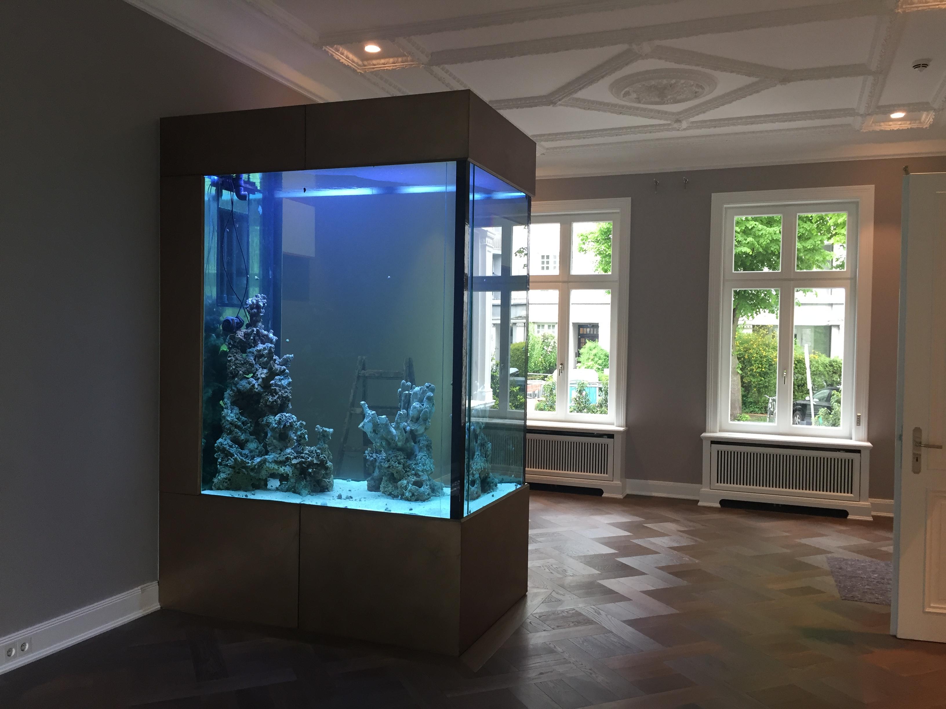 Das 2m hohe Aquarium