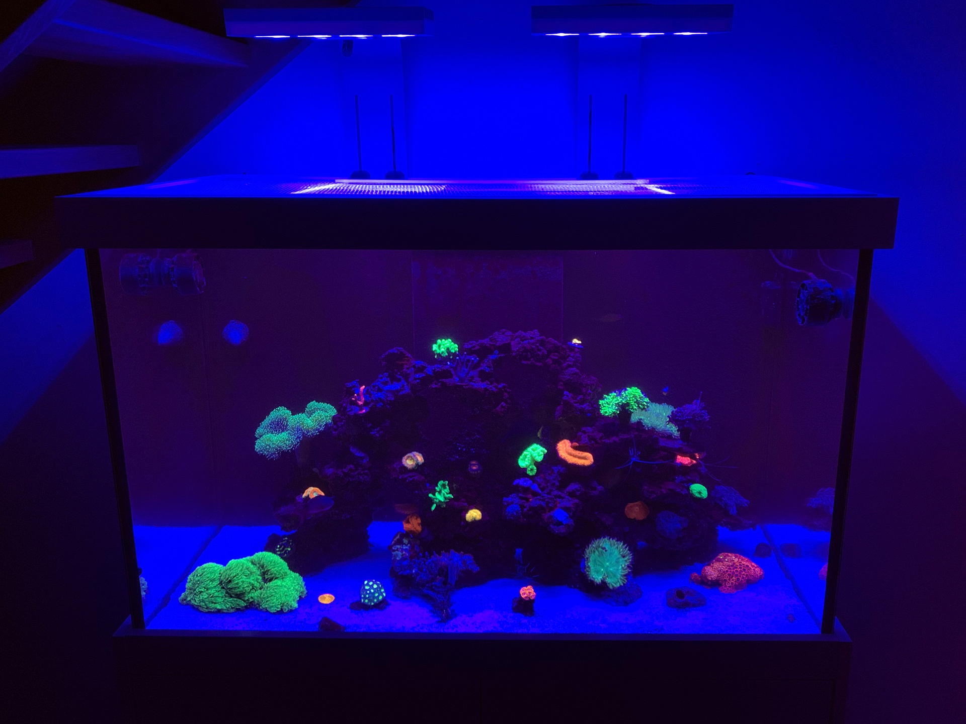 Das Fluoreszenz Meerwasseraquarium