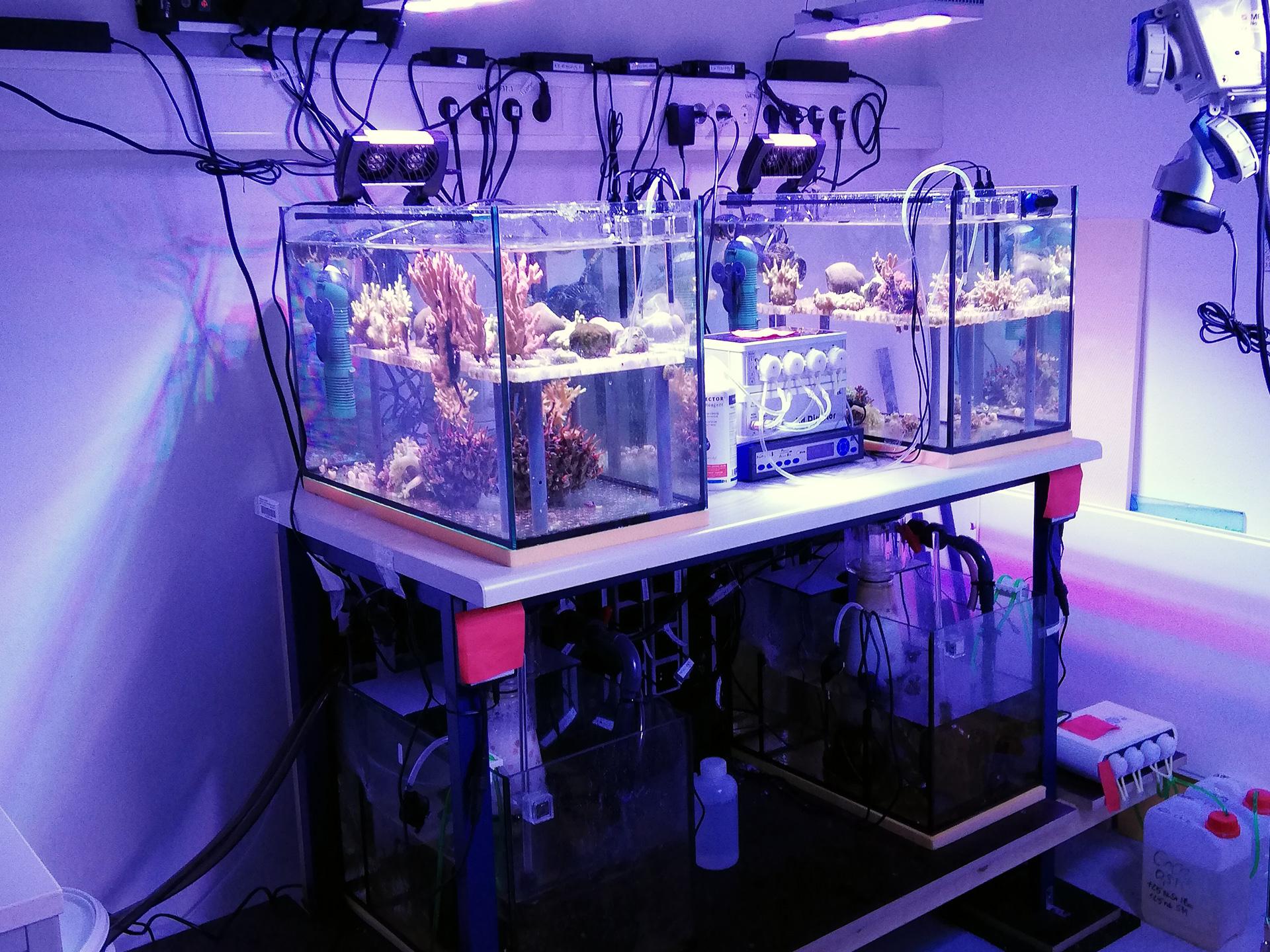 Meerwasser Versuchsanlage für Doktorarbeit