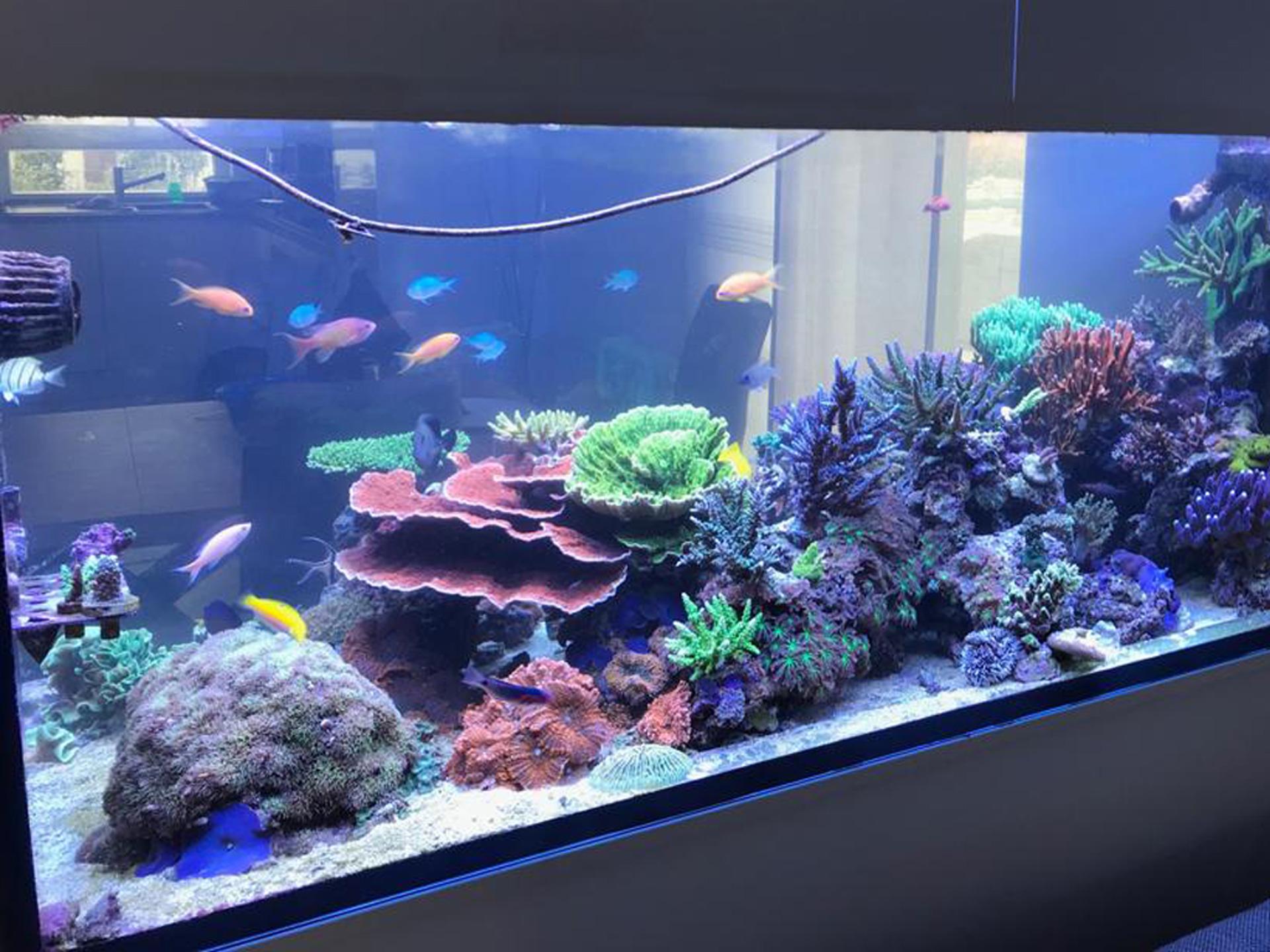 SPS only Meerwasseraquarium