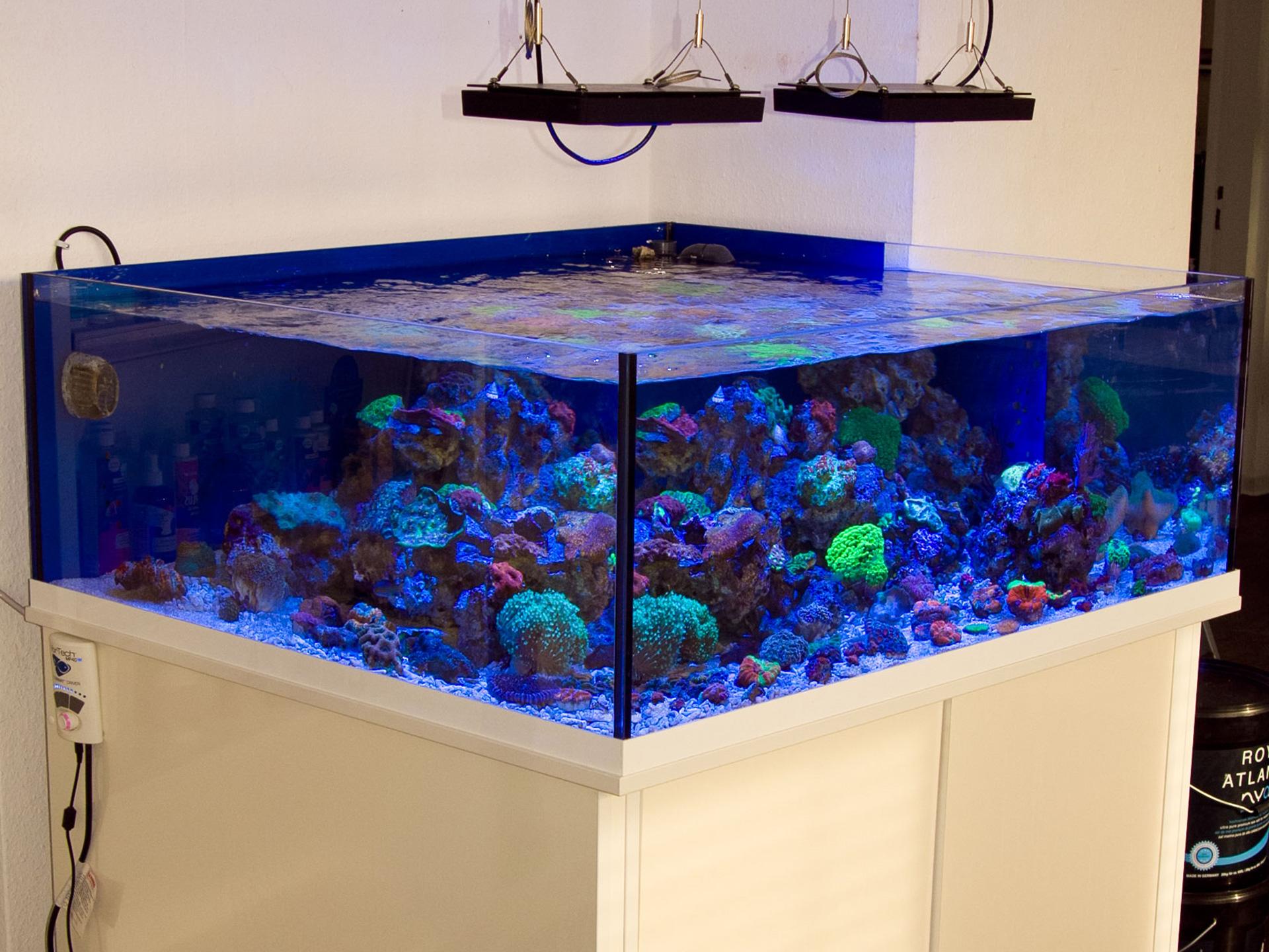 Das Shallow Reef