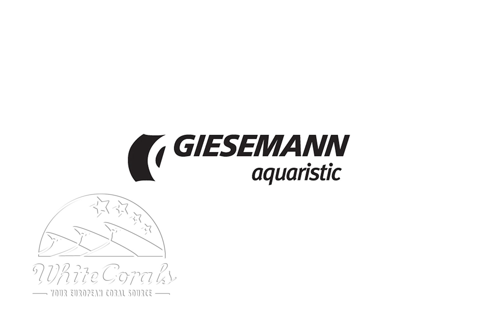Giesemann VIVA Aquarienhalter irridium metallic