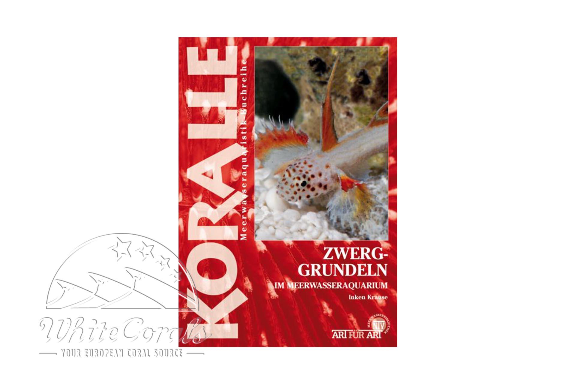 KORALLE - Zwerggrundeln im Meerwasseraquarium (Inken Krause)